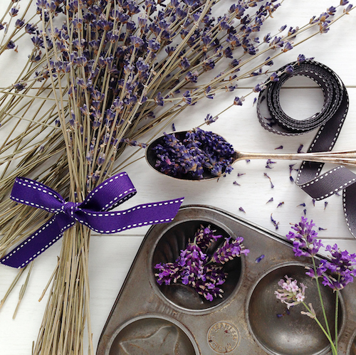Lavender 3870